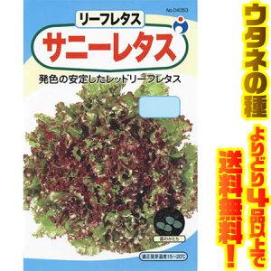 【メール便】【ウタネの種 よりどり4品以上で送料無料】ウタネ サニーレタス 4053サラダに最適、栄養満点