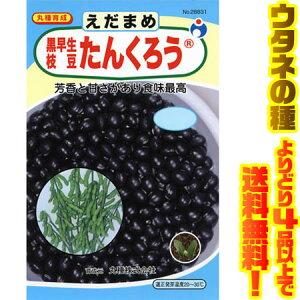 【メール便】ウタネ 黒早生枝豆たんくろう 28831芳香と甘みが抜群