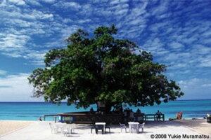 1000ピース 世界風景 アーモンドツリーバー(モンテゴペイ/ジャマイカ)