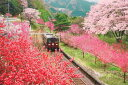 ■1000ピースジグソーパズル『春景色のわたらせ渓谷鐡道』《カタログ落ち商品》