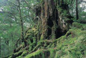 ジグソーパズルプチ 204ピース 日本の風景 屋久島の森(鹿児島) 98-369