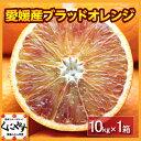 【送料無料】【希少品】【入手困難】【ファミリー用】愛媛産ブラッドオレンジ10キロ(タロッコ)