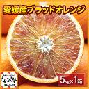 【送料無料】【希少品】【入手困難】【ファミリー用】愛媛産ブラッドオレンジ5キロ(タロッコ)