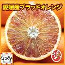 【送料無料】【希少品】【入手困難】訳あり愛媛産ブラッドオレンジ10キロ(タロッコ)
