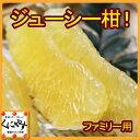 【送料無料】【ファミリー用】ジューシー柑10kg(10kg×1箱)見た目綺麗,河内晩柑と同一品種!