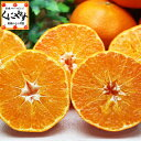 【ポイント10倍】【送料無料】お試し愛媛甘平(かんぺい)3kgせとかにも匹敵する柑橘「お試し甘平3」
