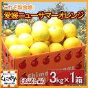 【送料無料】お試し品愛媛ニューサマーオレンジ(小夏)3kg