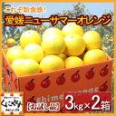 【送料無料】お試し品愛媛ニューサマーオレンジ(小夏)6kg(3kg×2箱)「お試し品小夏6kg」