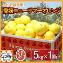 【送料無料】訳あり愛媛ニューサマーオレンジ(小夏)5kg「訳あり小夏5kg」