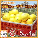 【送料無料】訳あり愛媛ニューサマーオレンジ(小夏)20kg(5kg×4箱)
