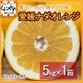 愛媛ナダオレンジファミリー用5キロ
