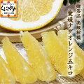愛媛ナダオレンジ贈答用5キロ