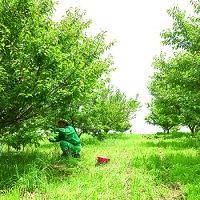 國盛FARM収穫