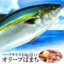 はまち ハマチ 活け〆オリーブハマチ《ハーフサイズ:下処理 原体4kg 1本の半身》 お歳暮 香川誇る ブランド魚 人気の…