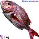 活け〆の真鯛を丸ごとお届け!3kg前後(原体サイズ) ◆愛媛を筆頭に最良の鯛をお届けします!(養殖:冷蔵) 3キロサ…