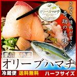 【送料無料】オリーブハマチハーフ半身でお手軽にお買い物♪美味しい瀬戸内の魚