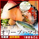 【送料無料 】はまち 寒ブリ 鮮魚 厳選!活け〆オリーブハマチ《1本まるごと:4kg超:下処理》 香川が誇るブランド魚を丁寧に下処理し…