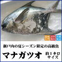 天然マナガツオ 瀬戸内産(香川県) 約1キロサイズ【送料無料】水揚げされたばかりの鮮魚を直送します(クール冷蔵便…