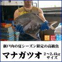 マナガツオ 天然 瀬戸内産(香川県) 約2〜2.4キロサイズ 高級魚【送料無料】水揚げされたばかりの鮮魚を直送します(クール冷蔵便:…
