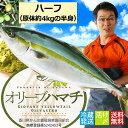 ≪2017年出荷始まりました≫ 厳選!活け〆オリーブハマチ《ハーフ:選べる下処理》 香川が誇るブランド魚を丁寧に下処理してお届けしま…