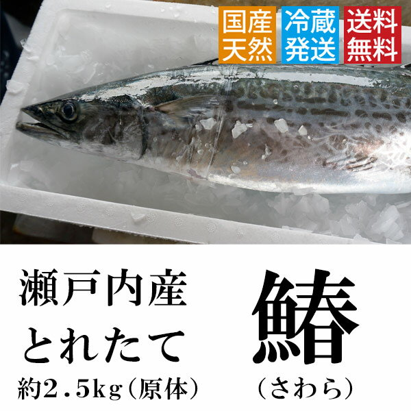 とれたて鰆!(さわら)【送料無料】 瀬戸内 香川県産 天然 鰆を一本丸ごと(3枚おろし可)直送します!約2.5kgサイズ(原体)【鮮魚】 ※サワラの水揚げが有り次第の限定商品となります。(西京焼き、天ぷら等)