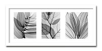 【送料無料】「LeafCollection」【X-rayPhotograph】StevenN.Meyers(エックスレイフォトグラフインテリアアートフレーム)[絵画通販]