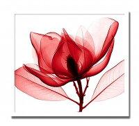 【代引き不可】「RedMagnolia」【X-rayPhotograph】StevenN.Meyers(エックスレイフォトグラフインテリアアートフレーム)[絵画通販]【絵のある暮らし】【壁掛けフックつき】