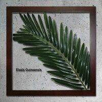 「ElaeisGuineensis」【リーフコレクション】(リーフインテリアフレーム)【人工観葉植物フレーム】[絵画通販]【絵のある暮らし】