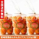 完熟きんかん (高級) 宮崎完熟キンカン 2L230g3個 産地直送 お試しセット フルーツ ランキング 第2位 美容玉 金柑