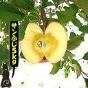 【青森 りんご】【優品 サンふじ りんご 5kg】      【送料無料】りんご農家自身が直接販売だから安い!!お…