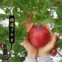 【青森 りんご】【特選 サンふじ りんご 5kg】【送料無料】りんご農家自身が直接販売だから安い!!おいしい!!