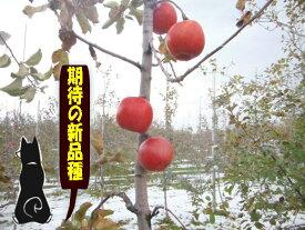 葉とらず春明りんご10kg