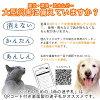 松岛清光堂生命的迷路的人纸币宠物标签钛