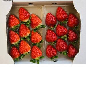 イチゴ あまおう 300g 福岡産 農家直送