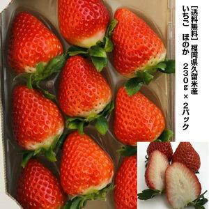 [送料無料]福岡県久留米産 減農薬栽培イチゴ ほのか 230g×2 福岡県エコ農産物 農家 直送 いちご大福 訳あり