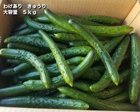 [送料無料]わけあり 福岡県久留米産農家直送!! きゅうり ラリーノ 大容量 5kg ピクルス 浅漬け 業務用 サンドウィッチ 漬物
