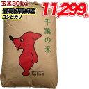 令和1年産 塩むすびで食べて♪厳選した生産者青柳産コシヒカリ 玄米 30kg 送料無料【精米無料】【送料無料】玄米 白…