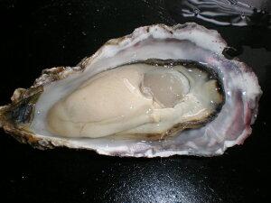 北海道厚岸産 殻付き 生牡蠣 生食用 10個入り(120g〜150g)