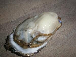 北海道 道東厚岸産の新鮮 大殻付活牡蠣(130g〜150g)30個 生食対応可