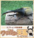 世界最大級カブトムシの王様◆ヘラクレスヘラクレス成虫ペア、オス125mmUP CB※オス×1 メス×1
