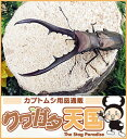◆メタリフェルホソアカクワガタ幼虫1.2令(ペレン産CB)*オスメス判別しておりません。