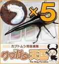 H.ヘラクレス幼虫5頭セット!H.ヘラクレス幼虫(1.2令)5頭オス、メス判別していません 【グアドループCB】