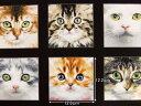 パネル柄 生地 布 USAコットン アドラブルペッツ 3810MULTI エリザベススタジオ Elizabeth's Studio Adorable Pets 約110×59cm ネコ 猫 キャット