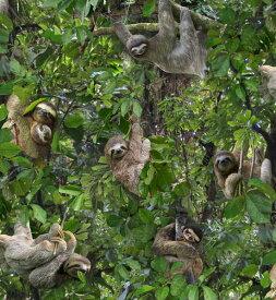 輸入 USAコットン 生地 布 Sloth スロース ナマケモノ 551-green エリザベススタジオ 商用利用可能