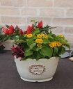 【良品 アウトレットセール】植木鉢 プランター ファイバーストーン [194-612-22] 7号 おしゃれ 可愛い 花 オーバル型 アンティーク風…