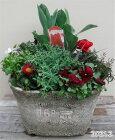 【寄せ植え】季節の寄せ植え/季節の花苗/鉢植え[100-3013-2]プロの寄せ植え/プレゼント/誕生日/母の日/父の日/ギフト/お祝い/贈り物/おしゃれ/かわいい/ファイバーストーン(194-942M-92)