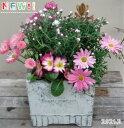 【寄せ植え】季節の寄せ植え/季節の花苗/鉢植え[100-3017-8] 寄植/プロの寄せ植え/プレゼント/誕生日/母の日/父の日/ギフト/お祝い/贈…