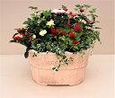 【寄せ植え】鉢植え/季節の花苗 [100-3014-1] プロの寄せ植え/プレゼント/誕生日/ギフト/お祝い/贈り物/おしゃれ/かわいい/ファイバー…