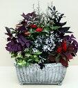 【寄せ植え】鉢植え/季節の花苗 [100-3014-2] プロの寄せ植え/プレゼント/誕生日/ギフト/お祝い/贈り物/おしゃれ/かわいい/ファイバー…