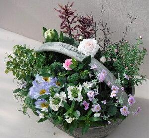 【寄せ植え】季節の寄せ植え/季節の花苗/鉢植え[100-3014-3]プロの寄せ植え/プレゼント/誕生日/ギフト/お祝い/贈り物/おしゃれ/かわいい/ファイバーストーン(194-923M-91)